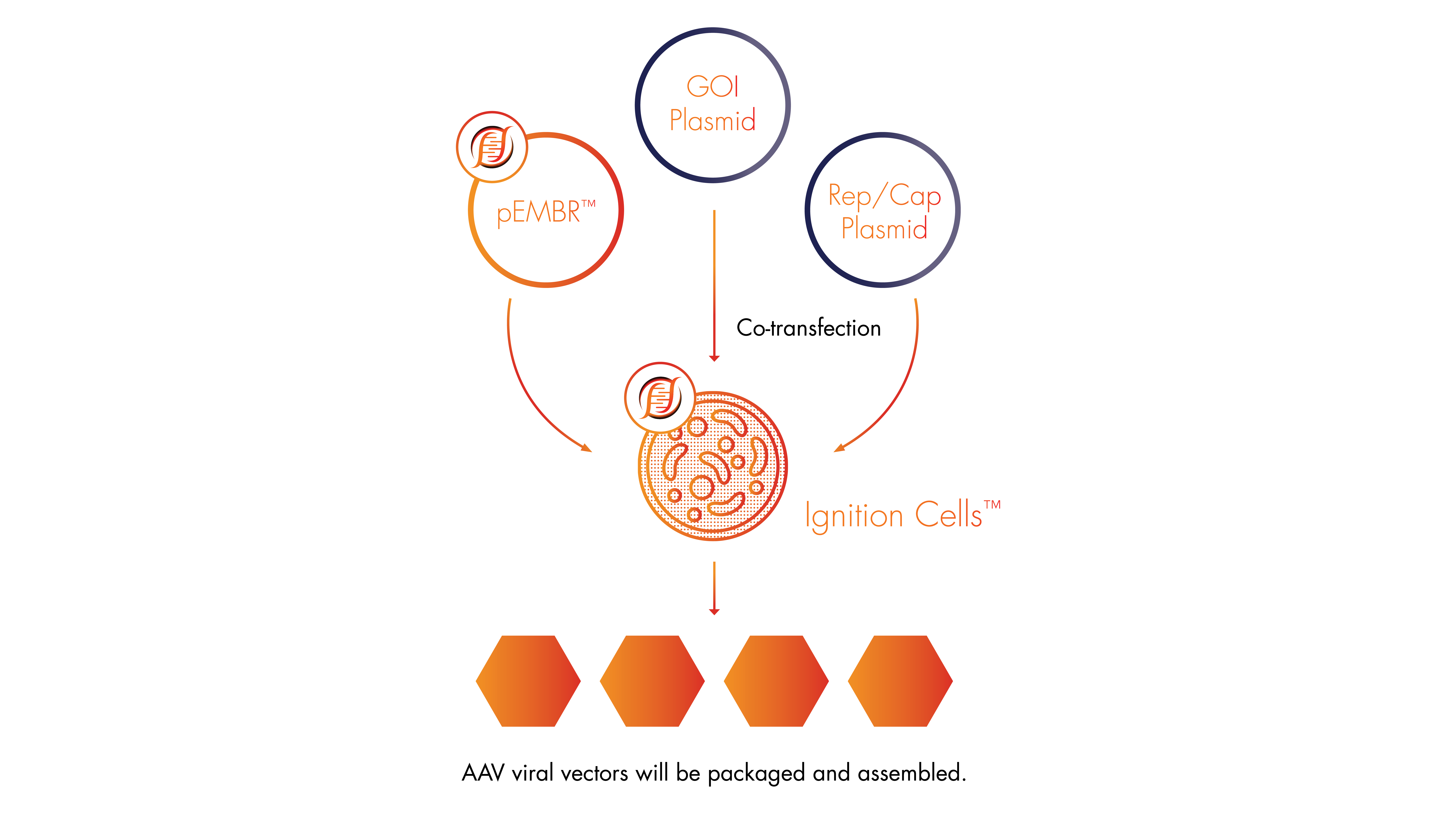 ForgeBiologics_Elements_2